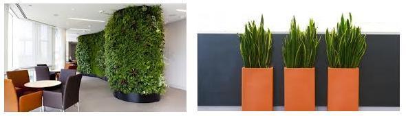 Plantas ideales para la oficina el telar verde for Plantas decorativas para oficina