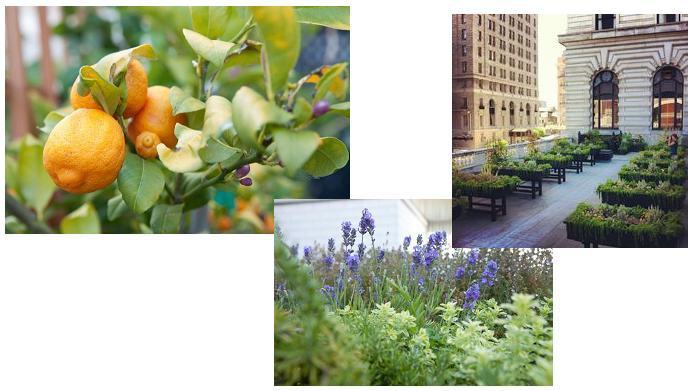 Jardines en el Fairmont San Francisco