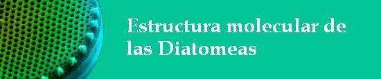 estructura_diatomeas